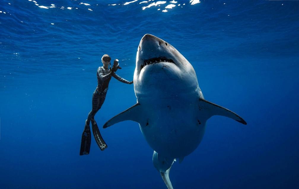 O tubarão-branco conhecido como 'Deep Blue', nada no mar do Havaí — Foto: @JuanSharks/@OceanRamsey/Juan Oliphant/oneoceandiving.com via Reuters