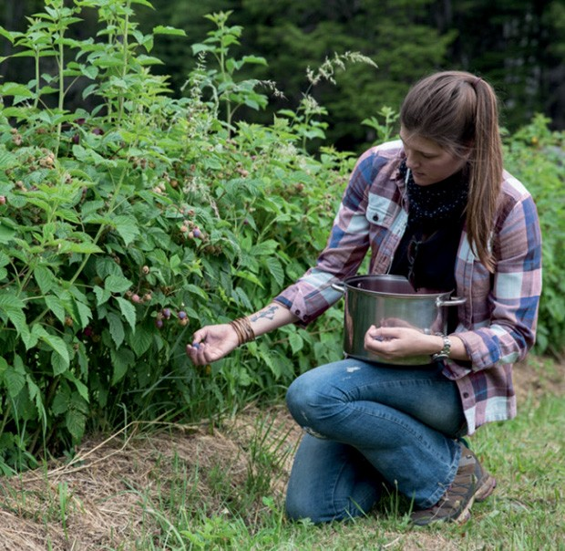 Colheita de framboesas orgânicas  (Foto: Divulgação)