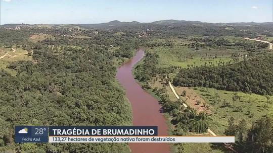Tragédias em Mariana e Brumadinho devastaram mais de 1.600 hectares de vegetação