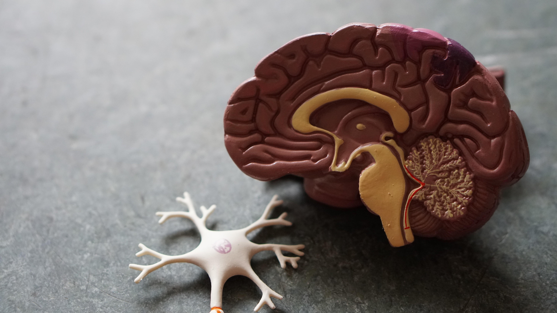 Anormalidades no sistema nervoso integram o amplo rol dos impactos da Covid-19 em uma série de estudos mundo afora. (Foto:  Robina Weermeijer/Unsplash)