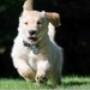 Tema Dogs in Summer Windows 7