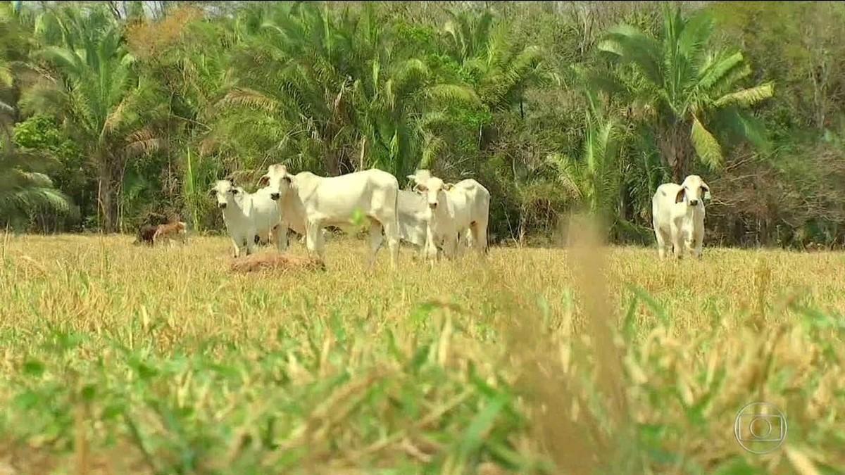 Furtos e roubos de cabeças de gado aumentam 24% em MT, diz levantamento