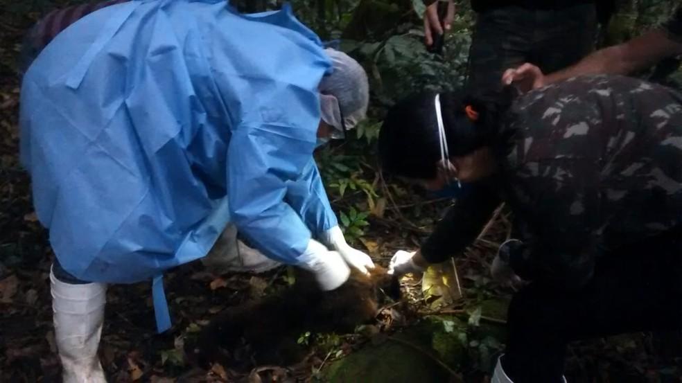 Exames foram feitos nos corpos de três macacos encontrados em Antonina — Foto: Divulgação/Prefeitura de Antonina