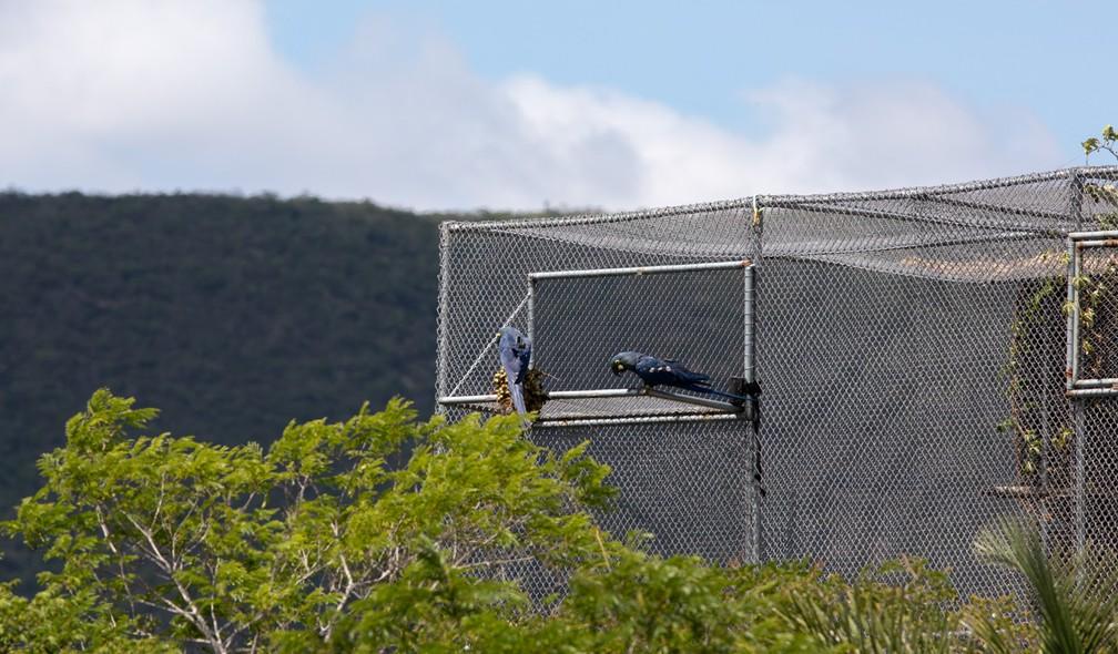 Viveiro foi construído no Boqueirão da Onça para ambientar araras-de-lear criadas em cativeiro antes de serem soltas na natureza.  — Foto: Marcelo Brandt/G1