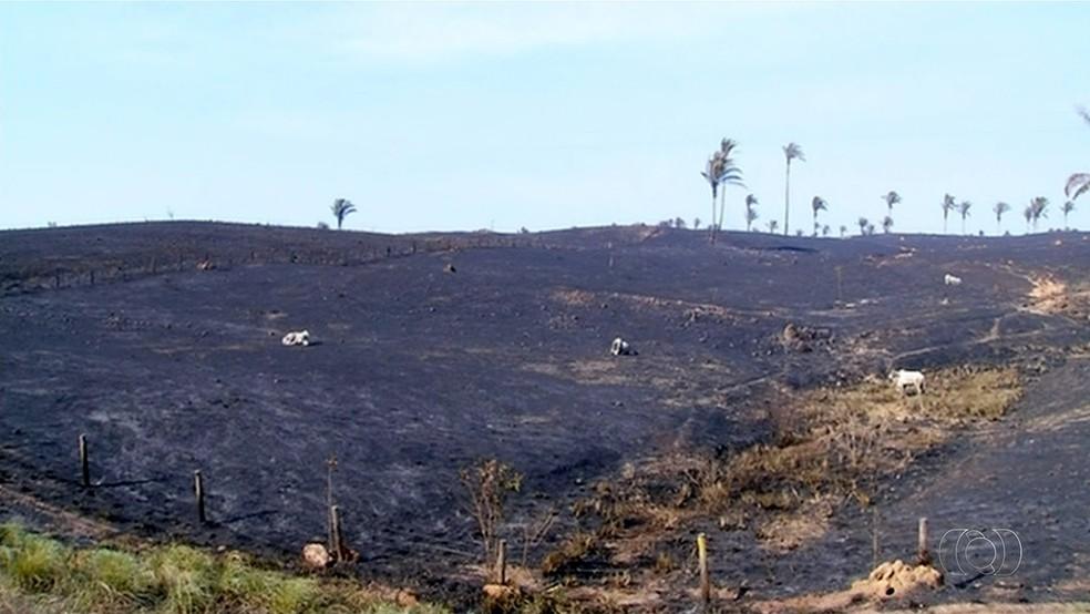 Incêndio pode ter matado cerca de mil cabeças de gado (Foto: Reprodução/TV Anhanguera)