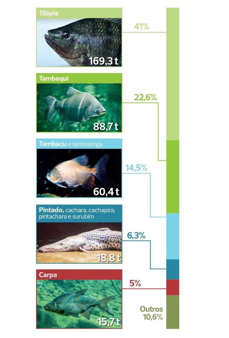 peixes-piscicultura-especies (Foto: Filipe Borin/Ed. Globo)