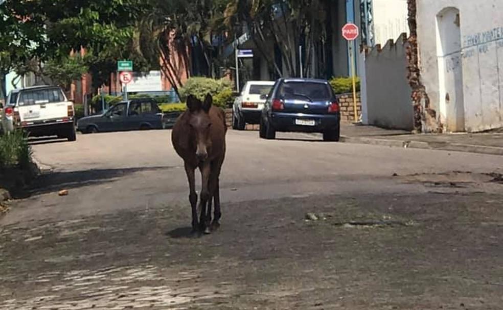 Mula foi resgatada das ruas de Laranjal Paulista por protetores de animais — Foto: Arquivo Pessoal