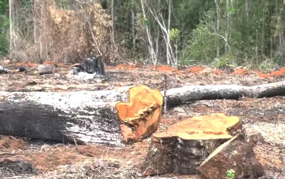 Área desmatada fica em propriedade privada, e proprietários estão sendo procurados — Foto: Reprodução/TV Bahia