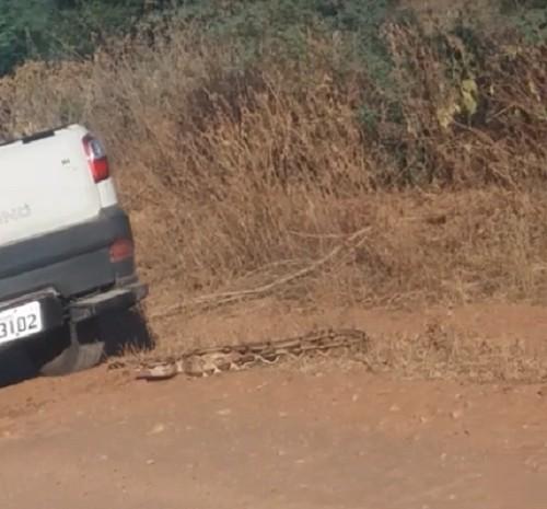 Vídeo mostra motorista passando carro por cima de cobra para tentar matar animal em Mossoró; polícia investiga