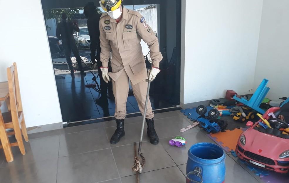 Bombeiros resgataram animal em casa em MT — Foto: Corpo de Bombeiros