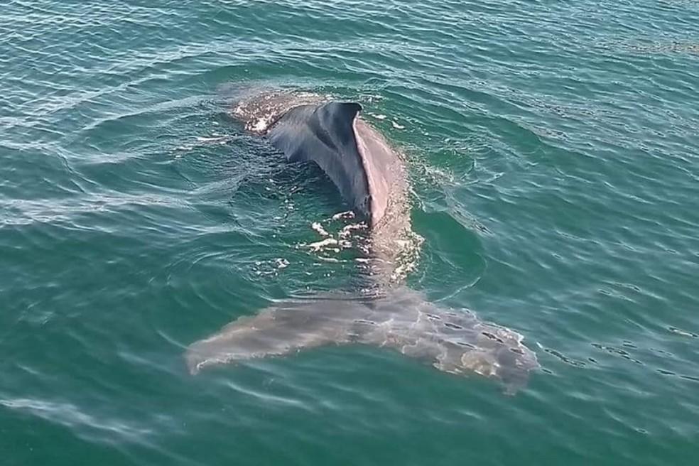 Filhote foi acompanhado por uma embarcação dos Bombeiros até a chegada em mar aberto, em Arraial do Cabo, no RJ — Foto: Divulgação/Prefeitura de Arraial do Cabo
