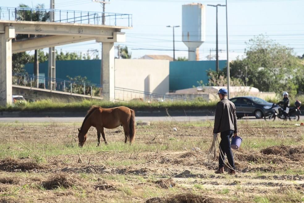 De acordo com secretário, animais soltos próximos a pista causam constantes acidentes — Foto: Jefferson Viana / Prefeitura de São Pedro da Aldeia