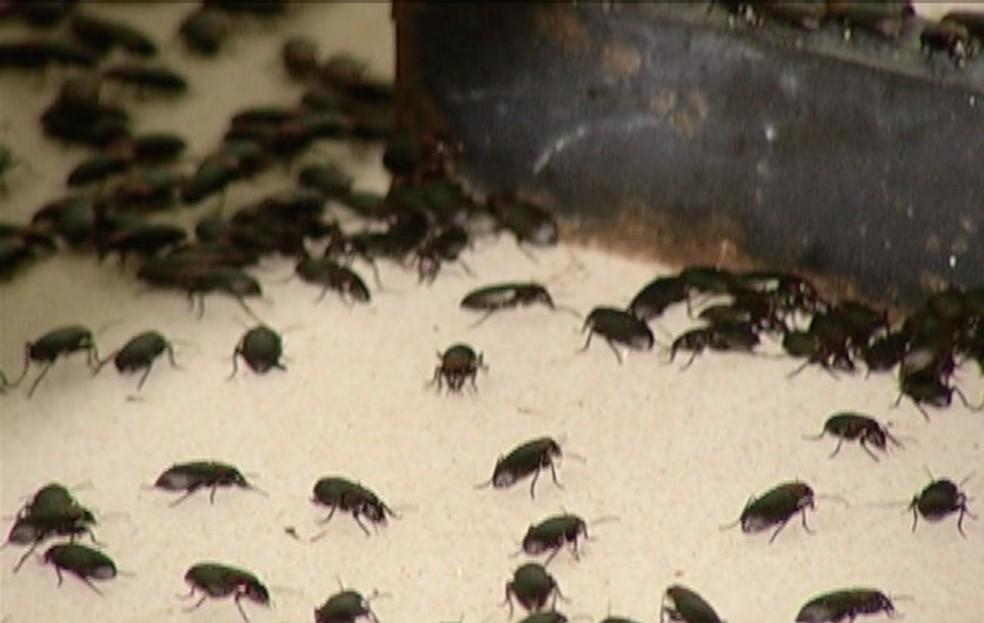 Espécie conhecida como Potó pode ter incidência menor caso predadores naturais sejam preservados — Foto: Reprodução/ Inter TV