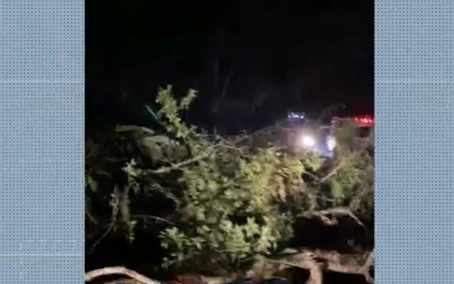 Árvore desaba e interrompe trânsito em rodovia do sul da Bahia