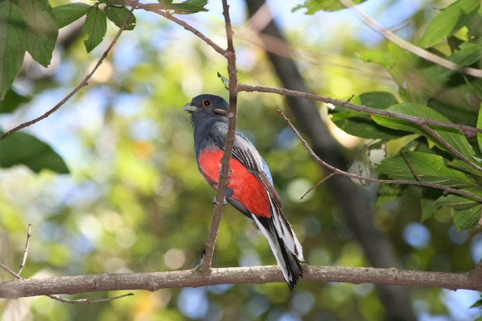 Parque Mata dos Godoy abriga 282 espécies de aves. — Foto: Arquivo Prefeitura de Londrina