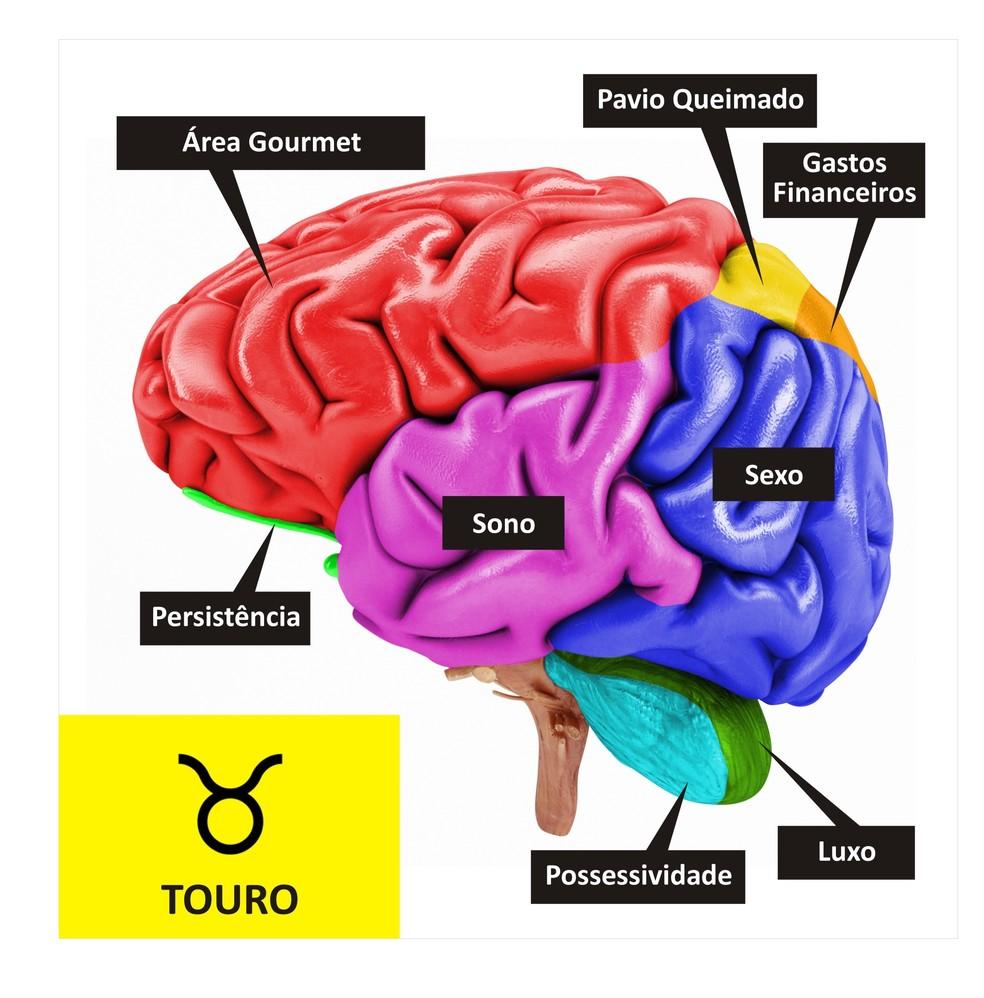 Cérebro de Touro  (Foto: TV Globo )