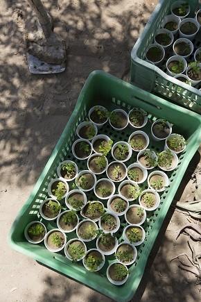 Acacias for All (Foto: Divulgação)