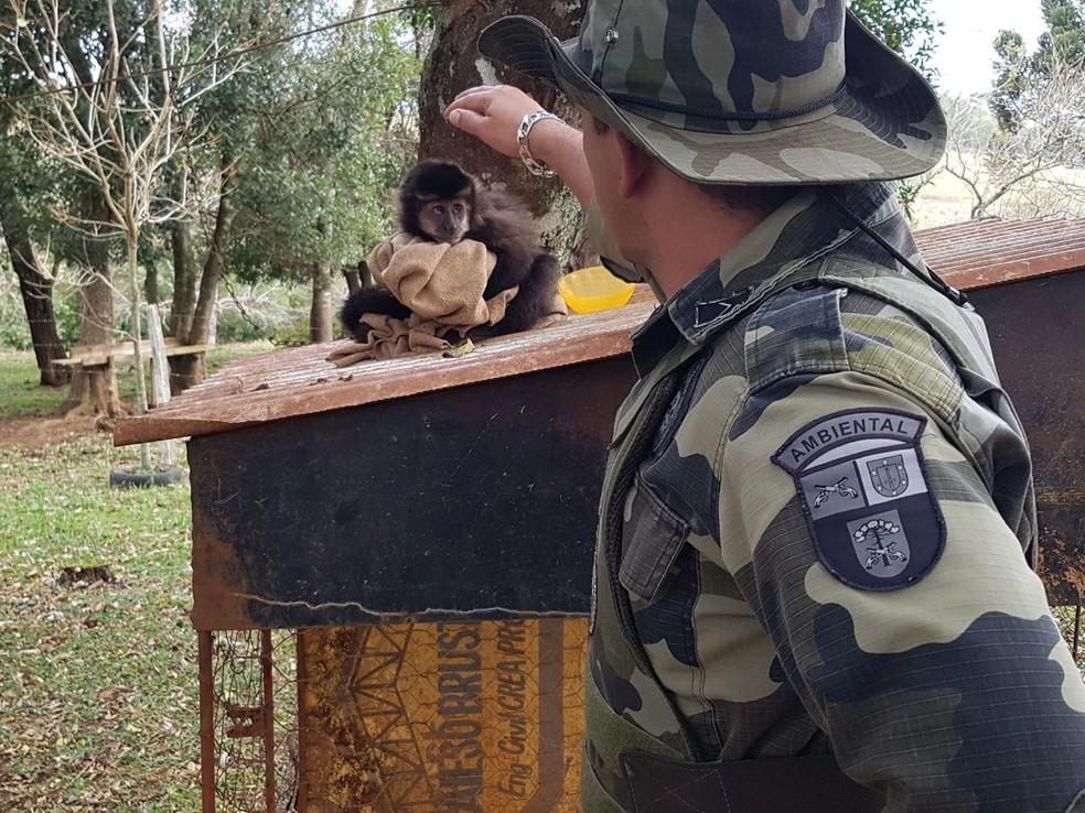Animal estava acorrentado, quando foi encontrado pelos policiais (Foto: Divulgação/PM)