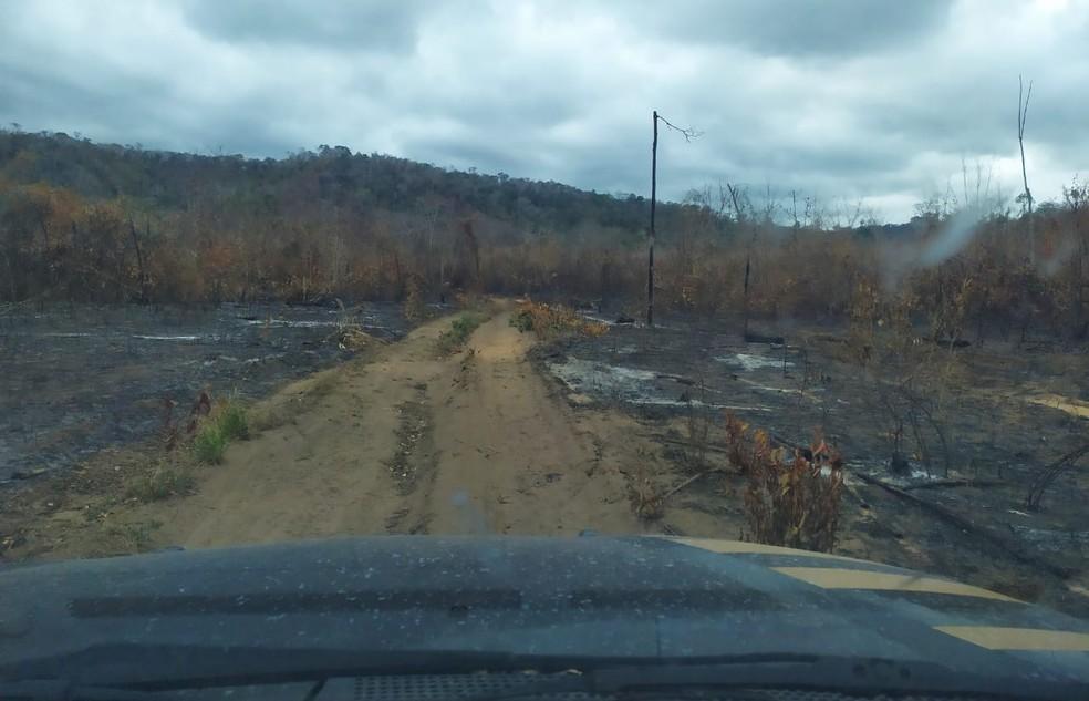 PF encontrou áreas desmatadas na reserva indígena dos Arariboia, entre Amarante e Arame — Foto: Divulgação/Polícia Federal
