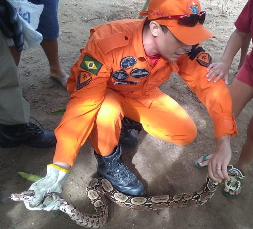 Bombeiros capturaram jiboia de 1,5 m na manhã deste sábado (21) em Iguatu — Foto: Corpo de Bombeiros/Divulgação