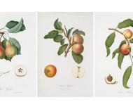Quadros botânicos: mais de 150 aquarelas gratuitas para você imprimir