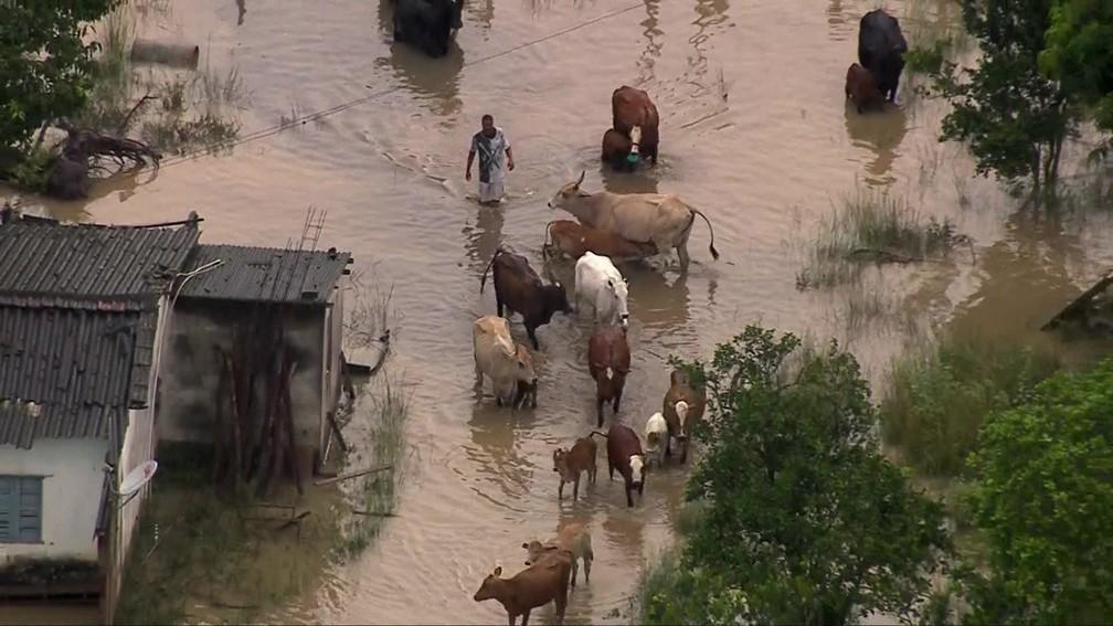Animais ficaram no meio da enchente em Queimados, na Baixada Fluminense — Foto: Reprodução/ TV Globo