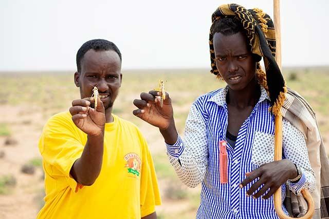 fao-somalia (Foto: FAO)