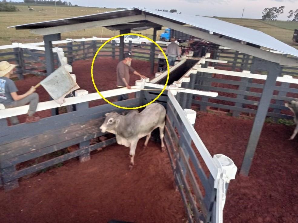 Círculo mostra Paulo Cupertino trabalhando em curral de sítio em Eldorado, Mato Grosso do Sul, onde cuidava do gado  — Foto: Reprodução/Divulgação/Polícia Civil