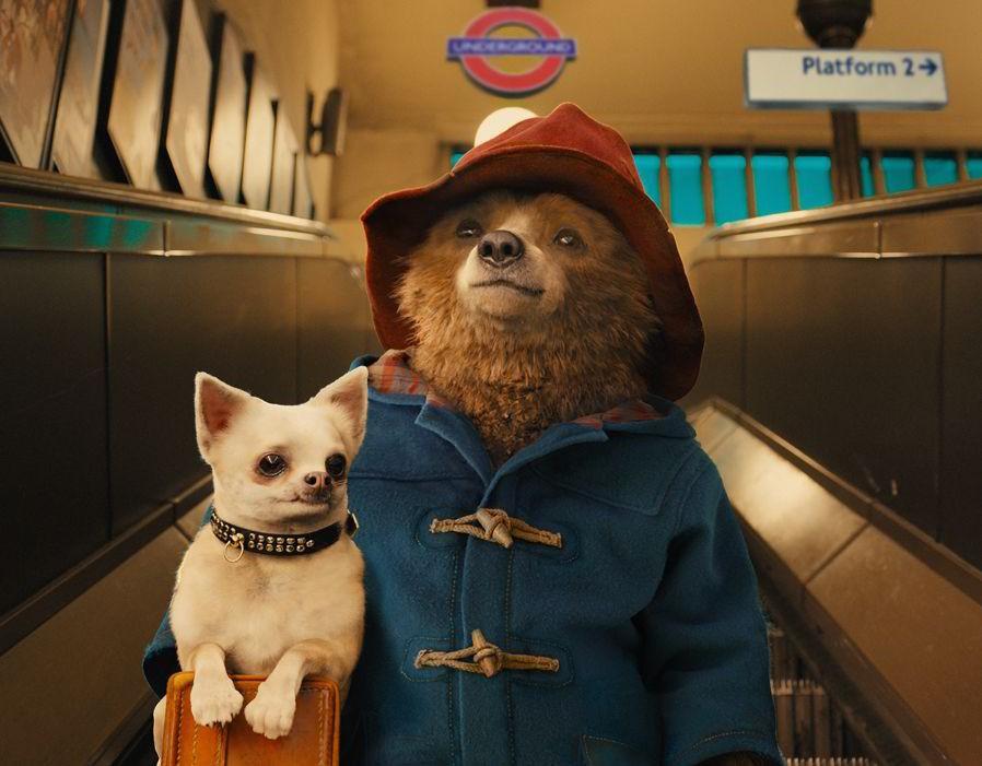 O ursinho Paddington vai te conquistar (Foto: Divulgação)