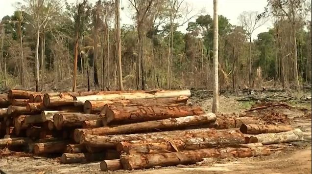 Área desmatada no Acre cresce mais de 400% em um ano, aponta estudo - Notícias - Plantão Diário