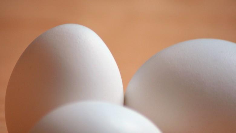 ovos-aves-granja (Foto: Paurian/CCommons)