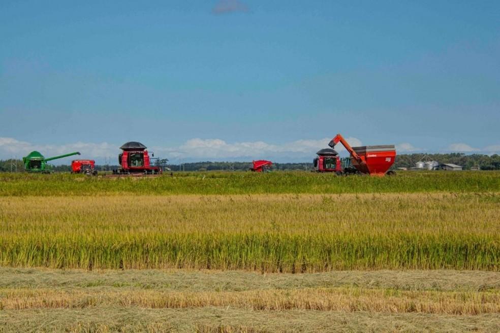 Colheita do arroz no Rio Grande do Sul. — Foto: Fernando Dias/Ascom Seapdr