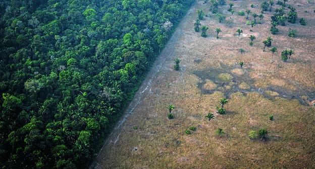 Dentre os biomas, o levantamento do MapBiomas aponta que a Amazônia foi o que mais perdeu área nativa nos últimos 34 anos