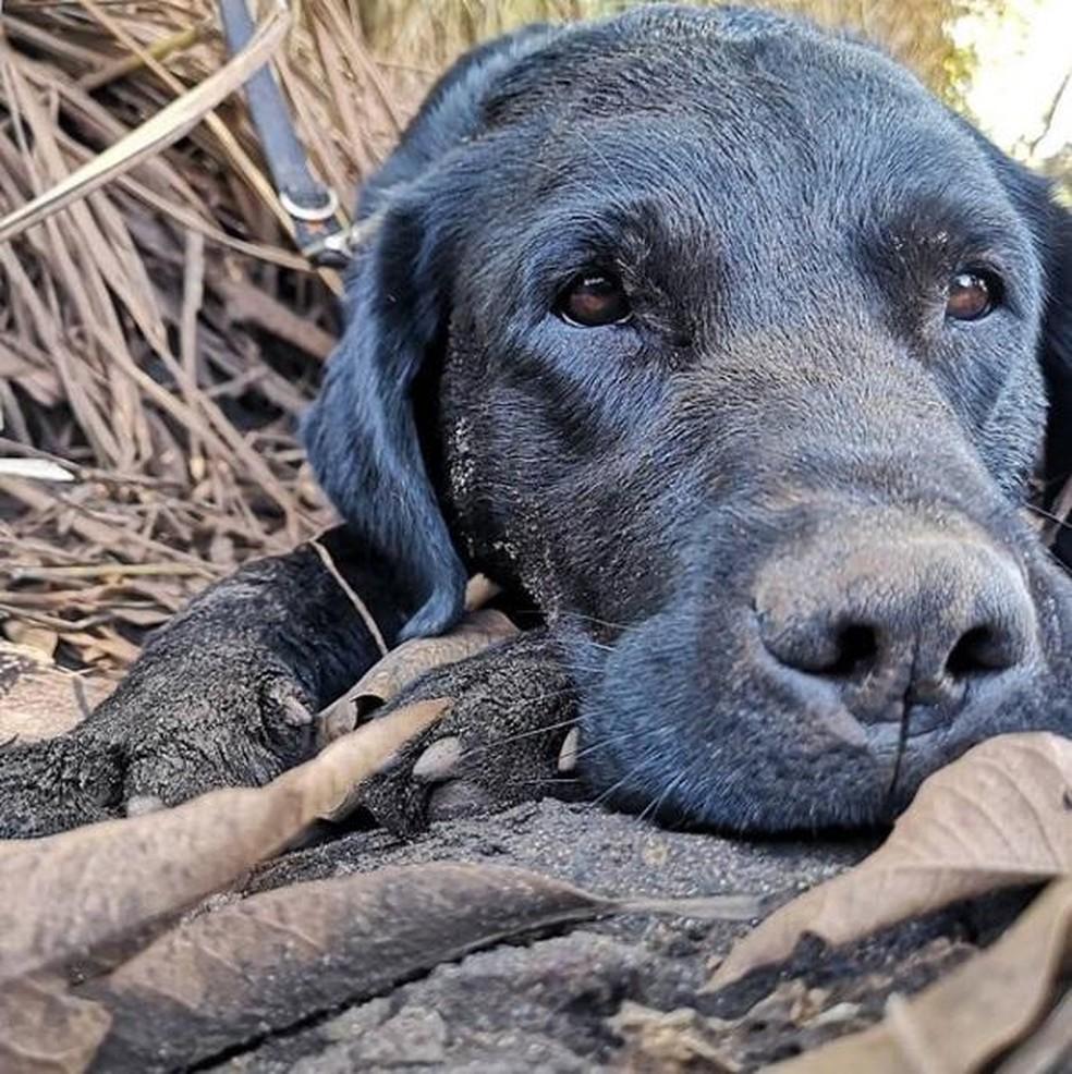 Corpo do cão Barney foi localizado em rio no Sul catarinense — Foto: Corpo de Bombeiros/ Divulgação