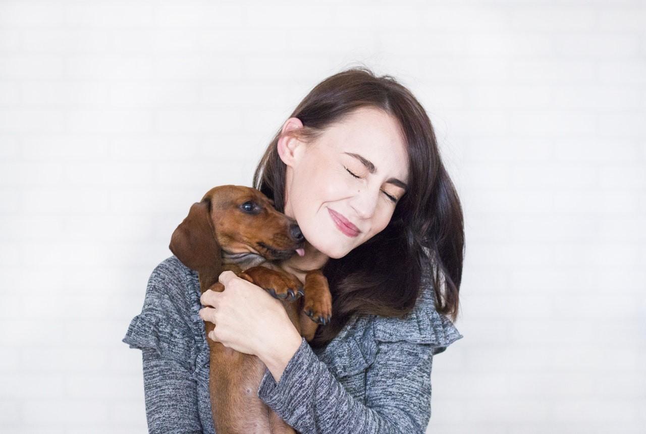 cachorro; carinho (Foto: Pexels)