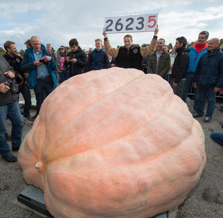 Willemjins estabeleceu um novo recorde mundial depois que sua abóbora atingiu incríveis 1.190,5 kg (Foto: Thomas Kienzle/AFP)