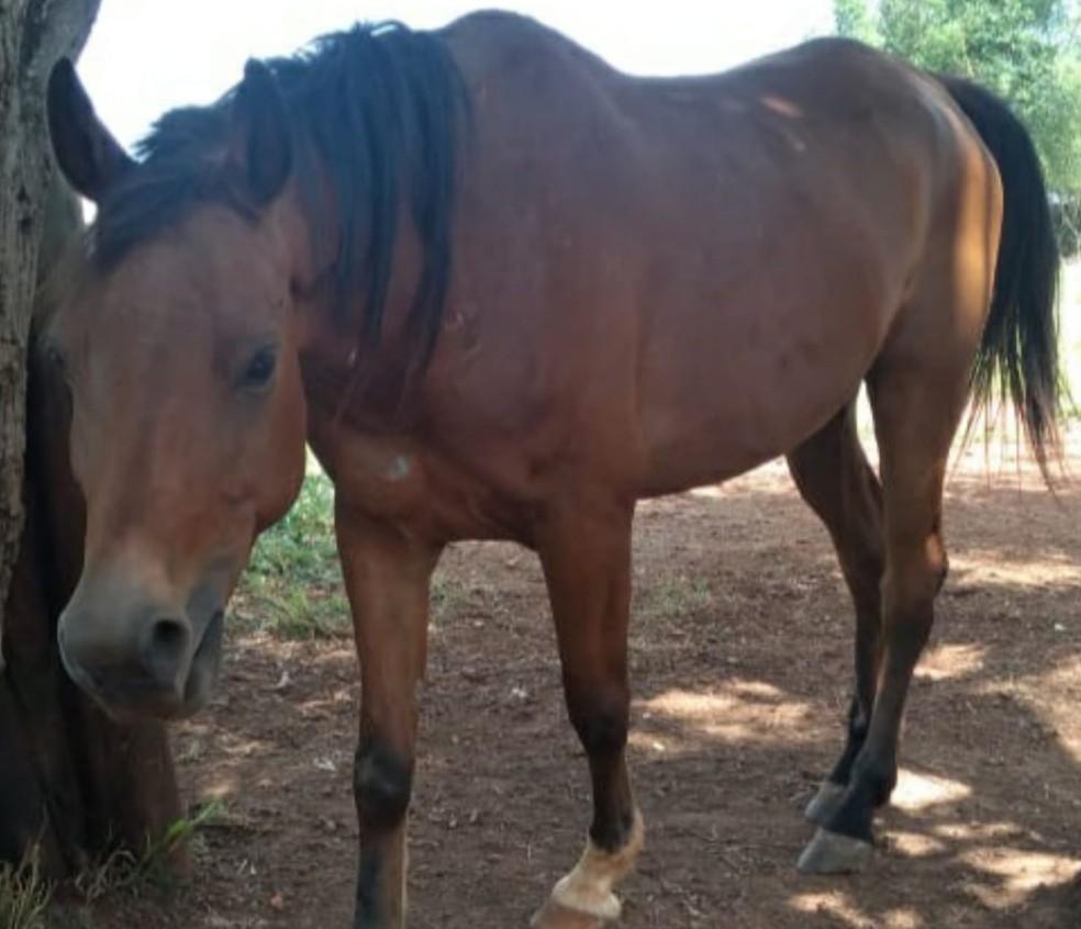 Rafa engordou 20 quilos e se recuperou em Itapetininga — Foto: UIPA/Divulgação