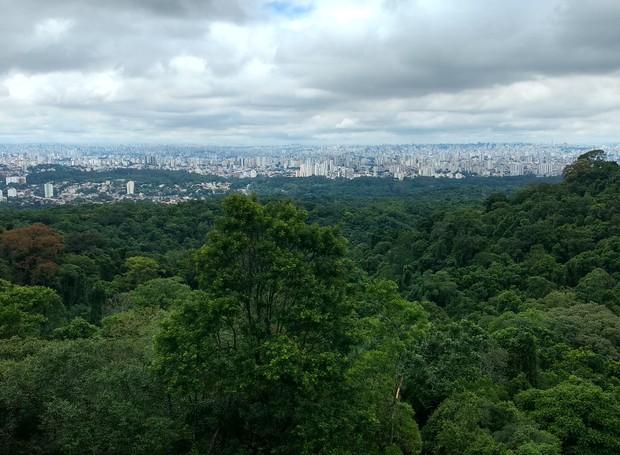 Parque Estadual da Cantareira (Foto: Wikimedia Commons/ Reprodução)