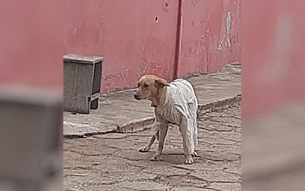Mulher registra cachorro de rua sendo agasalhado durante frio, em Alexânia  — Foto: Arquivo pessoal/Ana Maria de Carvalho Leite