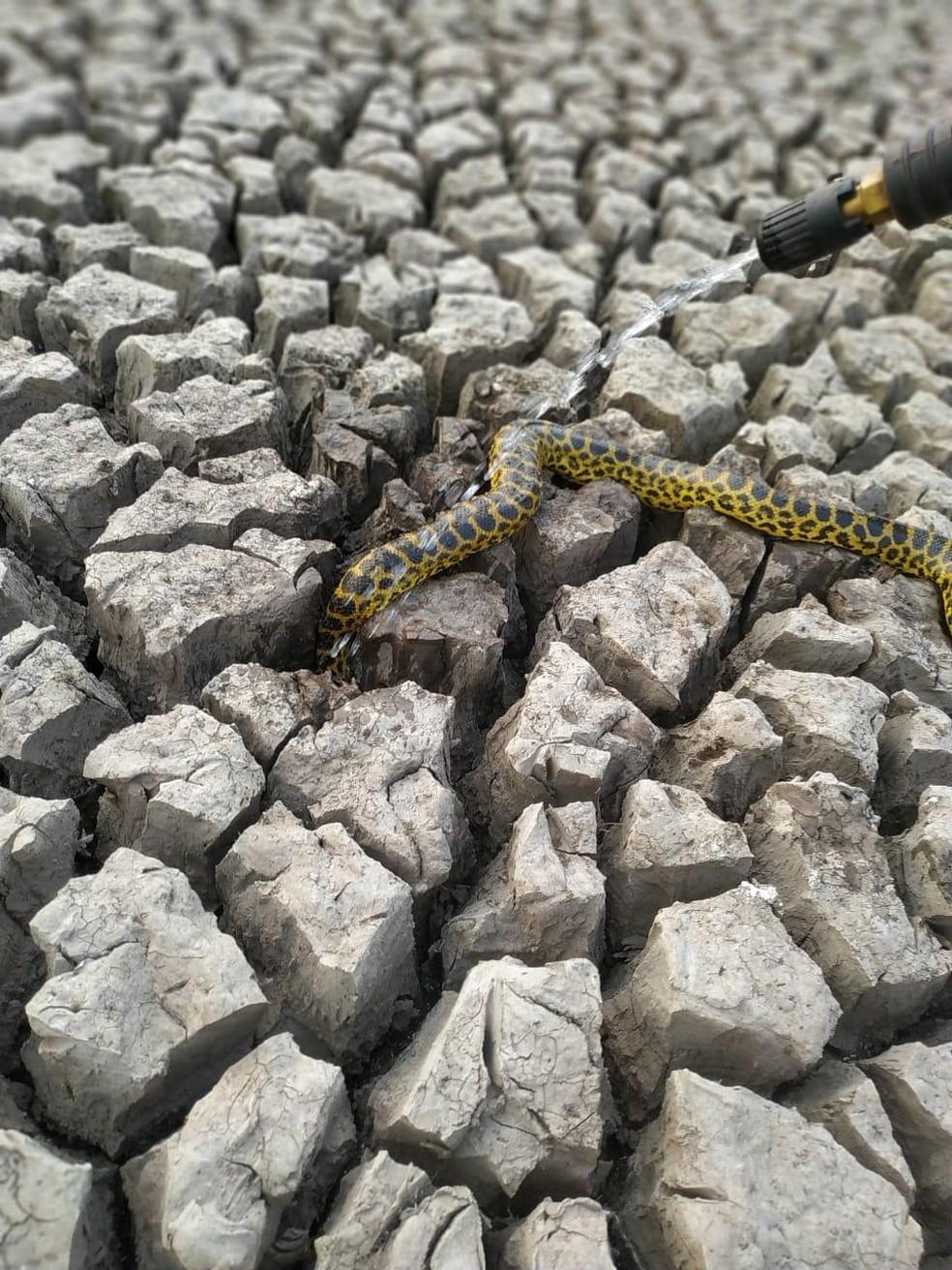 Bombeiros tentam salvar serpente em área devastada pelo fogo, no Pantanal de MS. — Foto: Corpo de Bombeiros/Divulgação