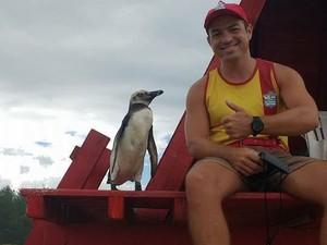 Pinguim foi achado na praia de Arroio Teixeira, no Litoral do RS (Foto: Humberto Gass/Arquivo Pessoal)