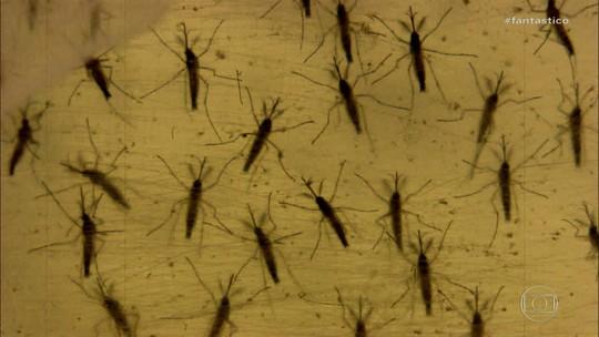 Estudo aponta que bactéria presente na água agrava casos de microcefalia causados pela zika