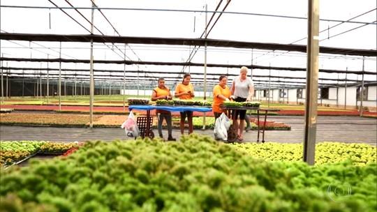 Mercado das flores emprega milhares de brasileiros em Holambra (SP)