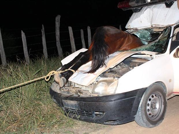 Cavalo entrou por para-brisa de carro em acidente na Bahia (Foto: Sessé Guimmas/MedeirosDiaDia)
