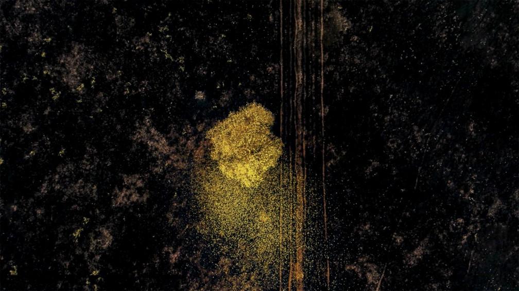 Ipê amarelo praticamente reluz em meio a paisagem devastada por incêndio em vegetação no cerrado de Mato Grosso do Sul — Foto: Luiz Felipe Mendes/Arquivo Pessoal