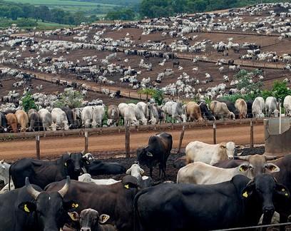 Cerco sobre pecuária em relação ao desmatamento está apertando, analisa Jank