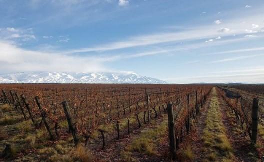 Vinhedo em San Pablo, em Mendoza
