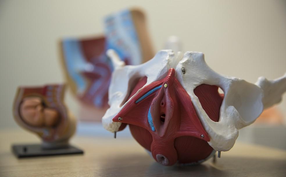 Modelo anatômico mostra como é a estrutura dos músculos do períneo em uma mulher (Foto: Rafael Leal/G1)