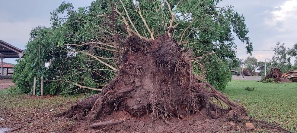 Árvores caíram com a ventania — Foto: Marcos Fabiano Peres Sales/Juína News