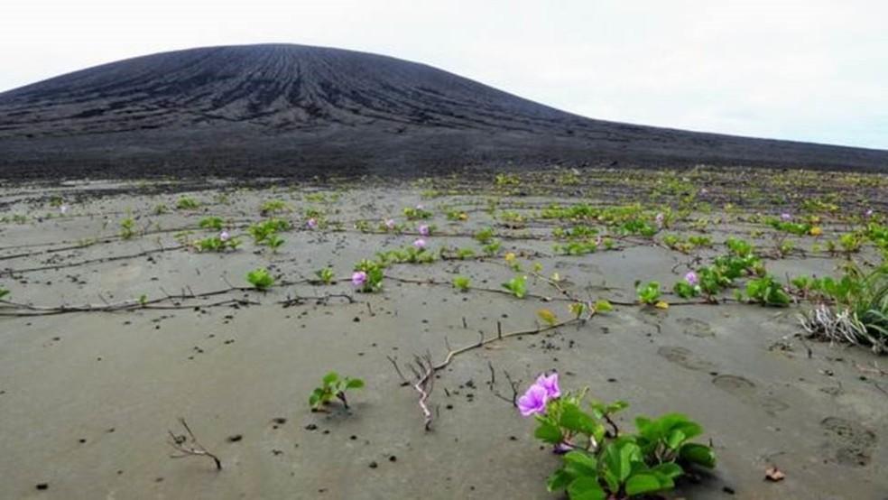 Vegetação nascida de sementes espalhadas por aves está colonizando a lama, na nova ilha do Pacífico — Foto: Dan Slayback